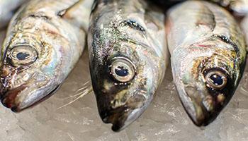 ryby-swieze-osman-legionowo-dystrybutor-warszawa-4
