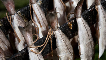 ryby-wedzone-osman-legionowo-dystrybucja-hurt-detal