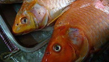 ryby-swieze-osman-legionowo-1